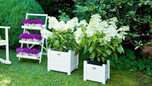 Les différents types de plantes pour embellir un jardin